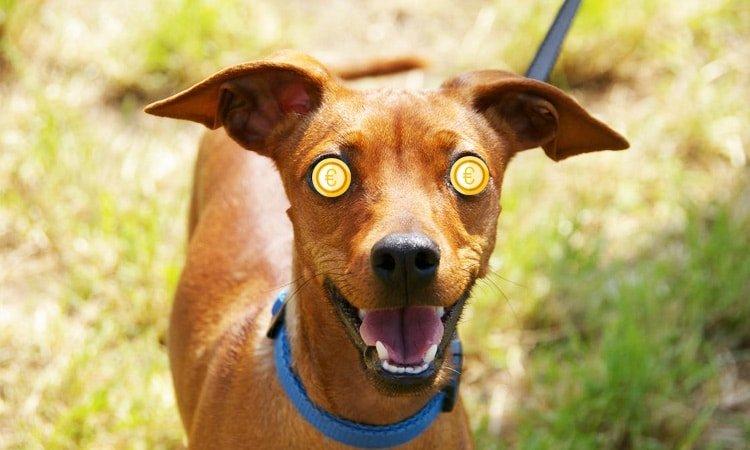 Honden uitlaten voor geld kan een ideale manier voor snel extra geld zijn.